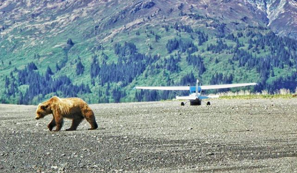bush flying alaska